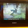 sony-dash-panda-cam.jpg