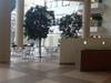 ipad-2-photo-tmc-lobby.JPG