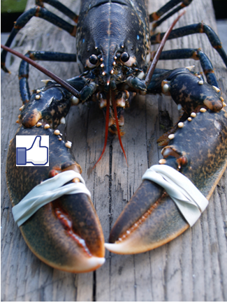 facebook-lobster.png